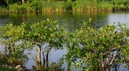 Stock Video Footage of Florida Everglades River