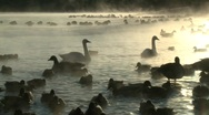 Stock Video Footage of P00120 Wetland and Waterfowl at Sunset