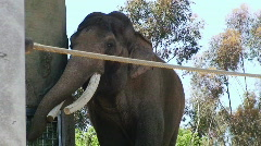 Elephant in Zoo HD Stock Footage