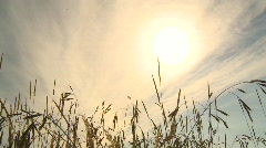 Wild grass and sun, #2 Stock Footage