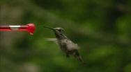 Hummingbird 12 Fly away Stock Footage