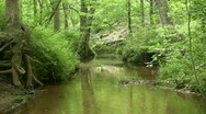 Stock Video Footage of Middle of a creek
