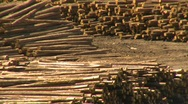 Industry, log mill montage, #1 Stock Footage