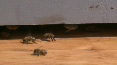 Honey Bees 4 Stock Footage