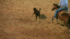 Steer roping bull dogging P HD 1097 Stock Footage