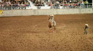Stock Video Footage of Charro cowboy lasso ride horse P HD 1108