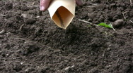 Stock Video Footage of Sowing carrots
