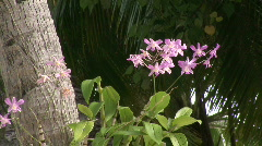 Orchid on Palm tree Stock Footage