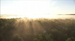 Forest at sunrise Stock Footage