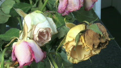 Wilted dutch tulips Stock Footage