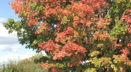 Stock Video Footage of Fall foliage 004