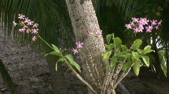 Pink Orchid on Palm tree trunk Stock Footage
