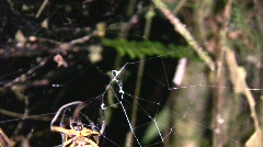 Spider spinning a web Stock Footage