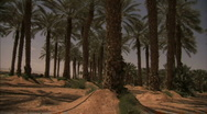 Stock Video Footage of Date palm trees