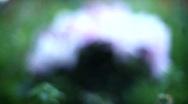 Focus on flowers Stock Footage