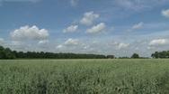Friesland landscape Stock Footage