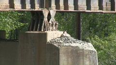 Goose nest Stock Footage