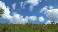 Green meadow Footage