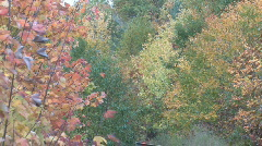 Zoom out shot of railroad track against forest of autumn color Stock Footage