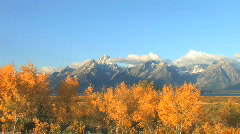 Grand Tetons with Yellow Aspens Stock Footage