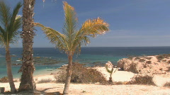 Palm trees framing a baja beach of rock and sand with pelicans flying overhead. Stock Footage