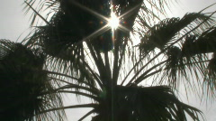 Silhouette shot of sun glinting through palm fronds as they sway in breeze. Stock Footage
