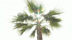 Backlit shot of sun glinting through palm fronds as they sway in gentle breeze. Stock Footage
