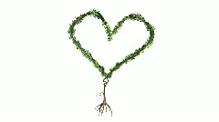 Growing Tree forming Heart (Color Version) - stock footage