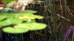 Dragonfly flies by near water-lilies in a pond Stock Footage