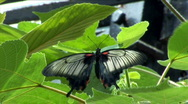 Butterfly sits on the sheet Stock Footage