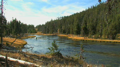 Fly Fisherman on Yellowstone River Zoom In Stock Footage
