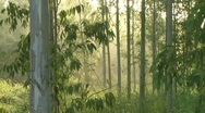 Stock Video Footage of Misty morning Chonburi province 3