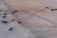 little turtles - stock footage