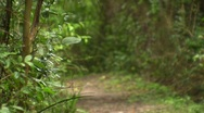 Stock Video Footage of Blurry forest trail