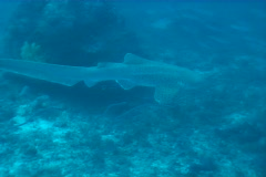 Sipadan sea life Stock Footage