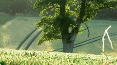 ENGLISH COUNTRY FIELD AT SUNSET - stock footage