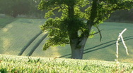 ENGLISH COUNTRY FIELD AT SUNSET Stock Footage