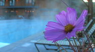 Stock Video Footage of Flower Beside Steaming Pool Zoom Out