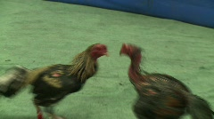 Cockfighting 3 Stock Footage