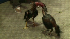 Cockfighting 1 Stock Footage