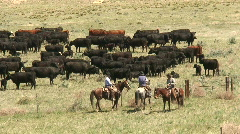 P00302 Cowboys and Cattle Ranching Stock Footage