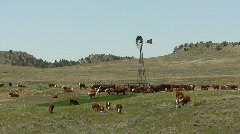 P00304 Cattle at Stock Tank on the Great Plains Stock Footage