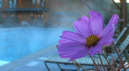 Stock Video Footage of Flower Adjacent to Steaming Pool