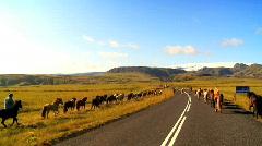 Herd of Wild Horses Stock Footage
