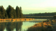 Mist Rising in Morning from Pond Stock Footage