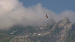 Stock Video Footage of Mountain Condor eagle flight