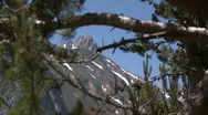 Stock Video Footage of Alpine mountain tree