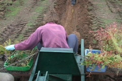 Planting Trees on a Farm Stock Footage