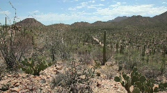 Saguaro National Park Cactus – Panning Stock Footage