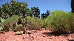 Desert Plants and Cactus with Red Dirt Stock Footage